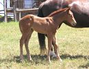 Trixies 2006 filly