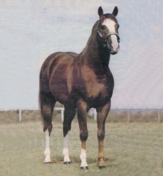 Bugs Alive In 75, Quarter Horse Race Sire
