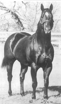Easy Jet, Quarter Horse Race Sire