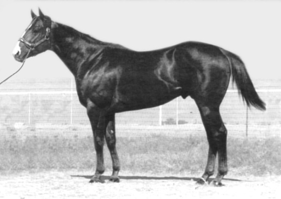 Easy Six, Quarter Horse Race Sire