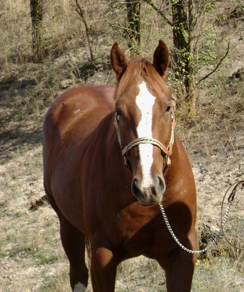 By Air Mail-9366 1 - By Air Mail Quarter Horse-3/4 Brother