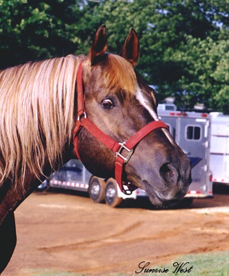 Fire Water Flit Barrel Horse Sire